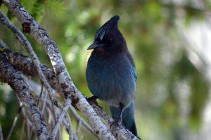 Yosemite Bird